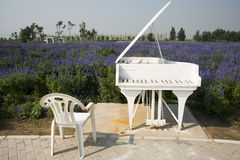 The flowers in full bloom, white piano and chair Royalty Free Stock Images