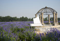 The flowers in full bloom, white piano and chair Royalty Free Stock Photography