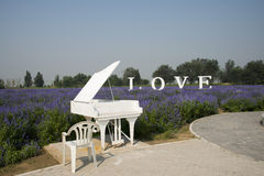 The flowers in full bloom, white piano and chair Stock Images