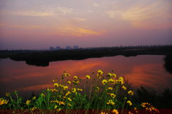 Flowers in full blossom with sunglow Stock Image