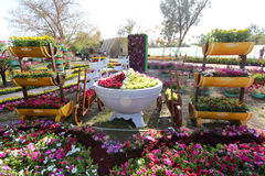 Flowers Gallery in Baghdad Royalty Free Stock Images