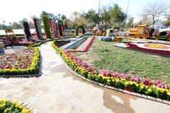 Flowers Gallery in Baghdad Royalty Free Stock Photo