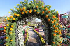 Flowers Gallery in Baghdad Stock Photography