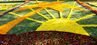 Flowers Gallery in Baghdad Royalty Free Stock Photos