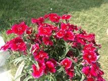 Flowers gardan. Greens natural rad Royalty Free Stock Photography