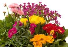 Flowers in the garden stock image