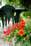 Flowers in garden. Red flowers in garden with table royalty free stock photography
