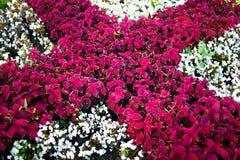 Flowers garden stock photos
