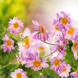 Flowers garden Stock Images