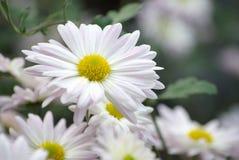 Flowers in garden Stock Photography
