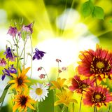 Flowers in the garden against the sun Royalty Free Stock Photo