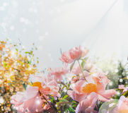 Flowers garden background with pink pale peonies. Royalty Free Stock Image