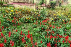 Flowers Garden In The Bangladesh royalty free stock images