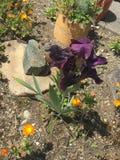 Beautiful flower in the garden stock photos