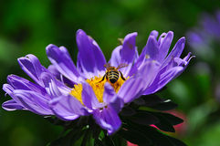 Flowers in the garden and bee Royalty Free Stock Photography
