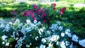 Flowers. Garden, botanic, nature, park stock image