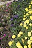 Flowers in garden Stock Images