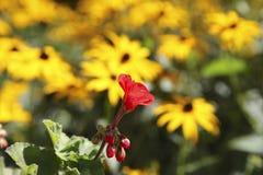 Flowers in the garden, Canada Stock Photos
