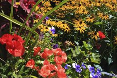 Flowers in the garden, Canada Royalty Free Stock Photos