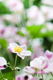 flowers in the garden, close up Royalty Free Stock Image