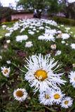 Flowers in a garden close up with a wide angle Royalty Free Stock Image