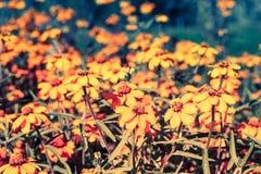 Flowers in the garden. Closeup of flowers in the  garden Stock Photos