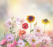 Flowers in the Garden Royalty Free Stock Photography