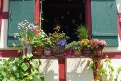 Flowers garden desing spring summertime Stock Image