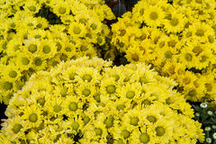 Flowers in garden festiva Royalty Free Stock Images