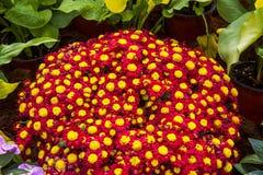 Flowers in garden festiva Stock Photo