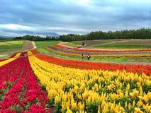 Flowers garden in Furano. A beautiful flower farm in Hokkaido, Japan Stock Images