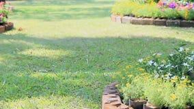 Flowers in the garden, HD vdo. stock video footage