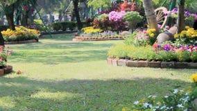 Flowers in the garden, HD vdo. stock video