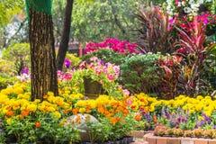 Flowers in the garden. Stock Photos
