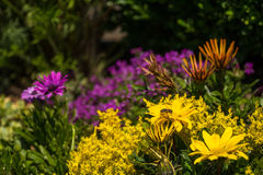 Coloroful flowerbed in garden Stock Photos
