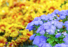 Flowers in the garden Royalty Free Stock Images