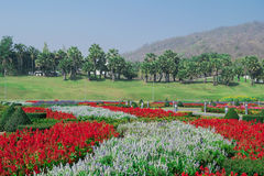 Flowers in garden. At a park with lawn, walk way, plam trees, mountain and blue sky background Royalty Free Stock Photo
