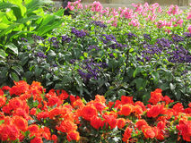 The flowers in the garden. Flowers in the Park of Wilanow Warsaw Poland Stock Image