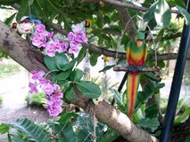 Flowers in the garden with parrots royalty free stock photo