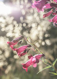 Flowers in a garden. Royalty Free Stock Photography