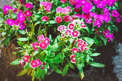 Flowers garden Royalty Free Stock Image
