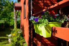 Flowers in the garden, pot Stock Photos