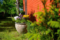 Flowers in the garden, pot Royalty Free Stock Image