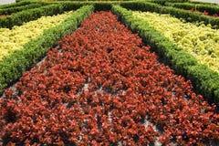 Flowers in garden Stock Photo