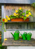 Flowers in the garden shed Royalty Free Stock Photo