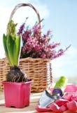Flowers and garden shovel Stock Images