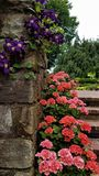 Flowers on the Garden Steps Royalty Free Stock Photos