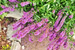 Flowers in the garden. Flowers in the garden in summer time Royalty Free Stock Photography