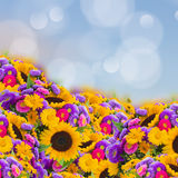 Flowers garden with sunflowers Royalty Free Stock Photo