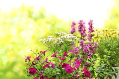Flowers in garden Stock Photography